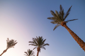 palms on exotic ocean (sea) beach. natural summer background