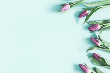 Flowers composition. Tulip flowers on pastel blue background. Spring, easter, mothers day, womens day concept. Flat lay, top view, copy space