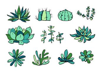 Succulent plants colorful set. Vector hand drawn outline sketch illustration