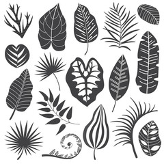 Collection of monochrome tropical leaves, palm tree branches, banana leaf and exotic rainforest leaves outline style. Botanical set with summer plant and jungle floral foliage silhouettes.