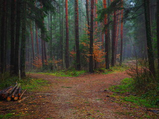 Forest track in autumn