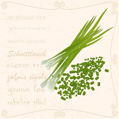 Green onions in vintage style vector picture