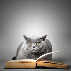 Funny cute cat reading book.