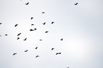 Foto op Aluminium Vogel flock of birds flying in the sky