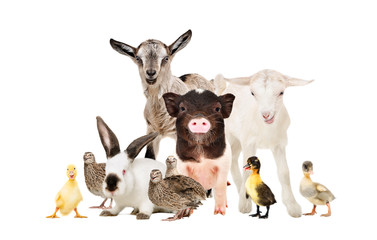 Cute farm animals together isolated on white background Wall mural