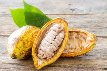 Fresh Cocoa Pod Fruits on a dark rustic wooden table background