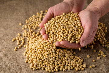 Ripe soy beans in hands