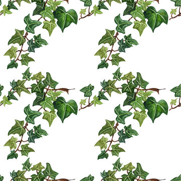 Watercolor seamless botanical ivy illustration. Botanical seamless pattern from ivy twig.