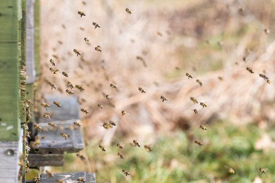 Fliegende Bienen am Bienenkasten vor unscharfem Hintergrund