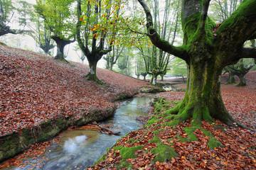 Otzarreta beech forest, Basque Country, Spain