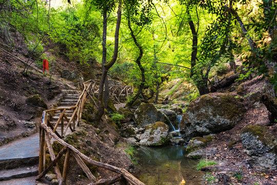 Walk among sweetgum trees in Butterfly valley (Rhodes, Greece)