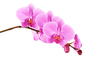 Photo sur Plexiglas Orchidée Orchids flowers on banch isolated.