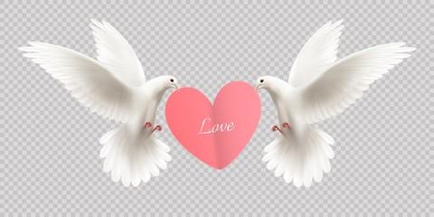 White Pigeons Holding Heart
