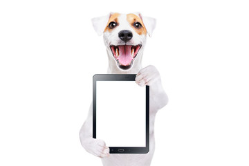 Portrait of a cheerful dog Jack Russell Terrier with tablet isolated on white background