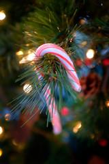 Candy Cane Candycane Hanging on Christmas Tree Decoration Celebrating Holidays
