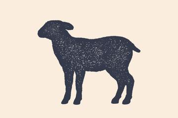Lamb, sheep. Concept design of farm animals