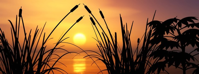 Sunset over the lake, the sun above the water, plants above the water during sunset