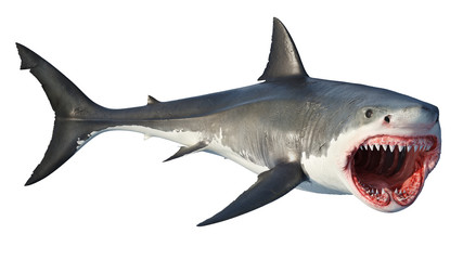 White shark marine predator big open mouth. Isolated background. 3D rendering Fotoväggar