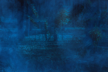 Mystical and ghostly blue fog in the night forest is scary and nobody around