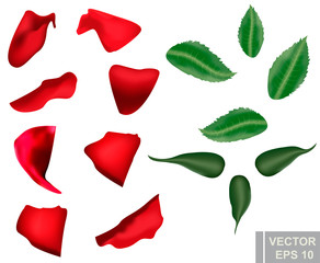 The Rose. Realistic. Cartoon style. Petals Flower. For your design.