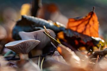Pilz und Blatt III