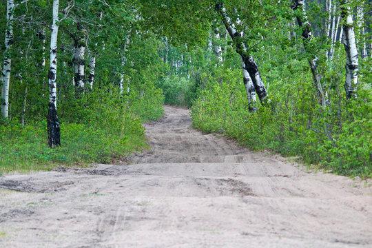 A bumpy atv trail through a forest