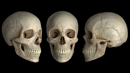 human skulls on a black background