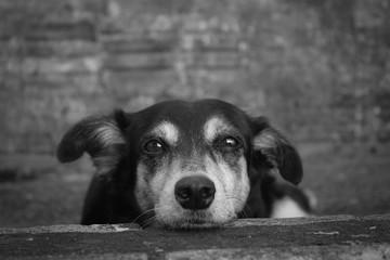 Cachorro reflexivo
