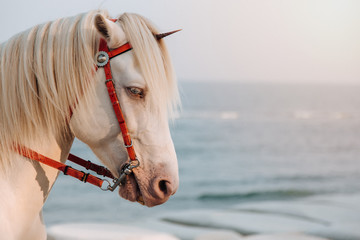 The white horse cosplay to Unicorn with small horn on the head with sea in sunset as a background, Real Unicorn, Head shot of horse.