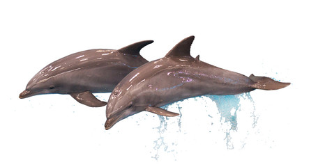 Papiers peints Dauphin Two jumping dolphins isolated