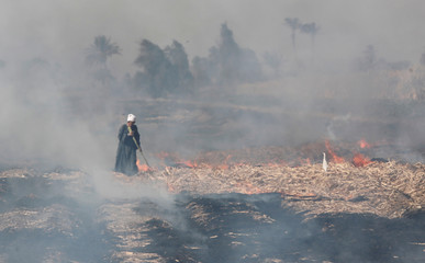 Farmer walks around fire in the field after harvesting sugarcane in Mallawi