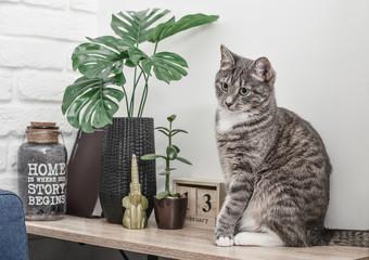 Grey cat sitting on shelf