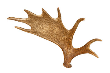 Moose horns isolated on white background Wall mural