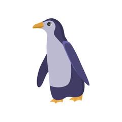 Antarctic penguin bird isolated on white background
