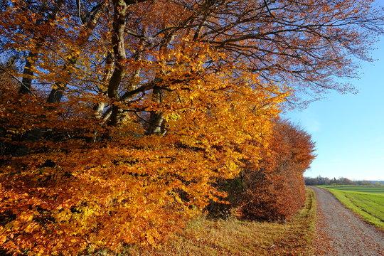 Bäume, Weg und Feld im Herbst, Andechs, Bayern