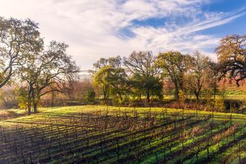 Chardonnay Landscape