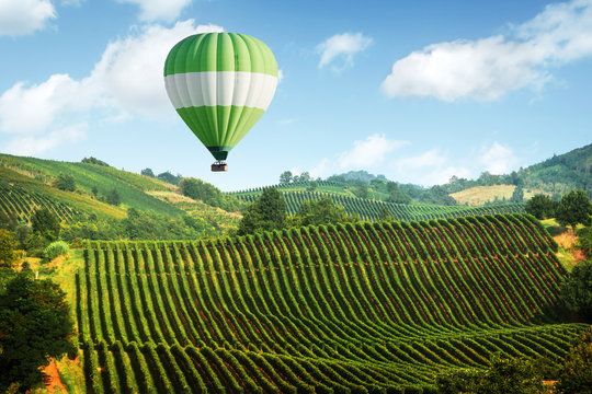 Amazing rural landscape with green balloon under vineyard on Italy hills. Vine making background