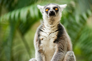Lemur by itself amongst nature.