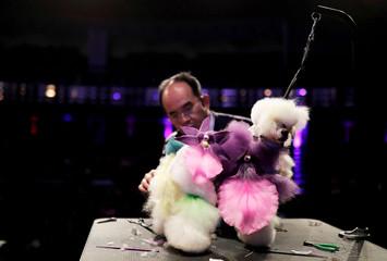 Thai dog groomer Sathit trims a dog's fur during a fair on animal esthetics in Sao Paulo