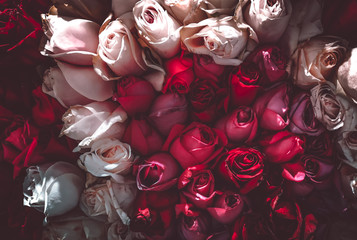 flowers wall background with amazing roses, vintage style