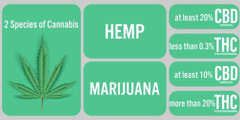 2 Species of Cannabis,Hemp and Marijuana background.Vector illustration