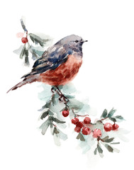 Watercolor Bird Robin on the Branch with Berries Hand Drawn Fall Illustration isolated on white background