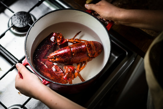 Freshly cooked lobster on the stove