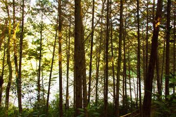 bosque de chiapas