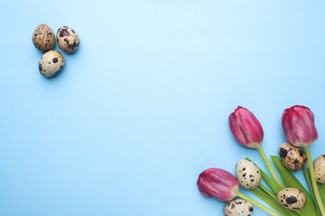 Bright flowers tulips and quail eggs on blue background. Spring and Easter holiday concept with copy space.