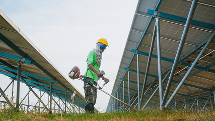 labor working on cleaning plant at solar power plant