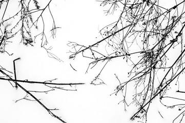 Deurstickers Vogels op boom winter