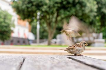 Sparrows on the table in the park