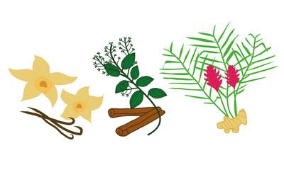 Drei Gewürze - Vanille, Zimt, Ingwer mit deren Pflanzen