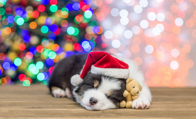 Australian shepherd puppy in red santa hat sleeping with toy bear with Christmas tree on background. Empty space for text